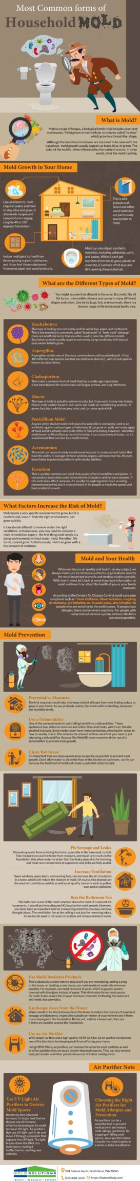 Common Types Of Household Mold